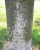 William Henry Allison Sr. - Indian Fork Baptist Church Cemetery - Shelby Couny, Kentucky, USA